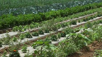 Vegetable farm, agriculture video