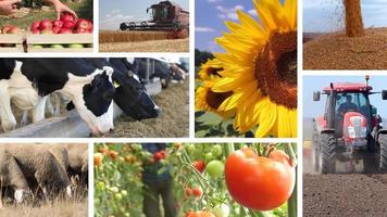 Agriculture - Food Industry Collage