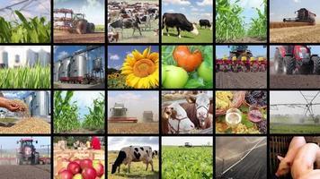 agricultura - tela múltipla de produção de alimentos video