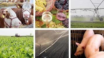 Landwirtschaft - Lebensmittelproduktion Splitscreen video