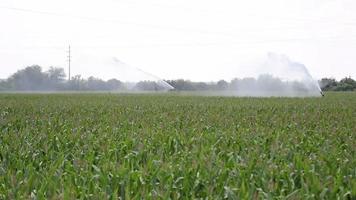 Agricultural Sprinkler Watering Crops video