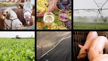 agricoltura - schermo diviso per la produzione alimentare video