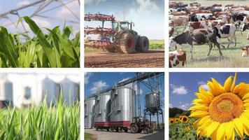 Landwirtschaft - Lebensmittelproduktion Multiscreen video