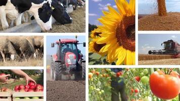 Landwirtschaft - Collage der Lebensmittelindustrie video
