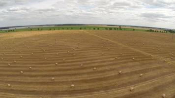 sobrevoar a agricultura de campo video