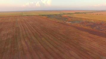 vista aerea di campi agricoli video