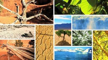 Montagebilder von grüner Vegetation und kargen Umgebungen