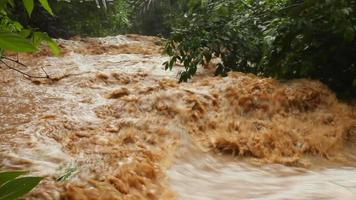 Mud and water pouring down a jungle watercourse video