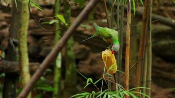 pássaros tropicais e frutas video