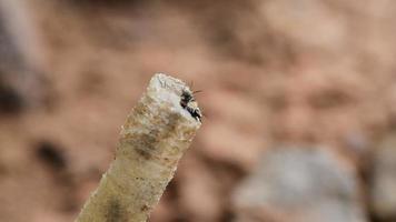 abeja en agujeros