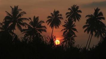 amanecer en el timelapse de la jungla