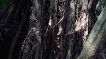 illuminazione e strutture della giungla tropicale del sudest asiatico. video