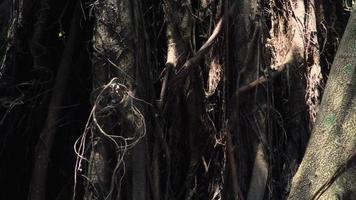 illuminazione e strutture di una giungla tropicale. video