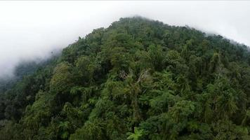 aérienne, vue plongeante sur la jungle de la brume matinale