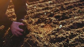 agricultor examinando o solo. fundo de agricultura.
