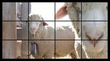 agricoltura e agricoltura, montaggio video