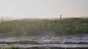 Bewässerung der landwirtschaftlichen Feldnahaufnahme