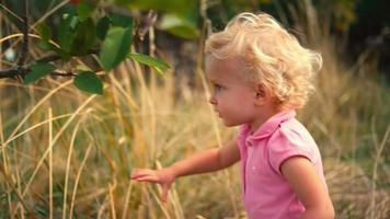 A cute little girl in a field tries to reach for apples on a tree video