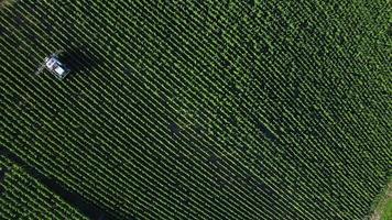 Luftaufnahme von Champagner-Weinbergen, Aube-Abteilung, Les Riceys