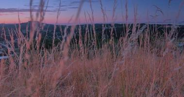 4K Macro Shot of Tall Dry Grass with Sunset in Background, Crane Shot