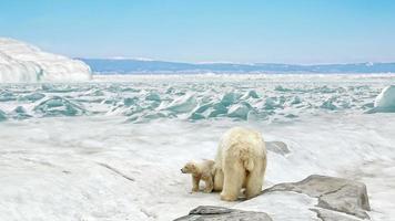 ursa com filhotes de urso em pé na neve