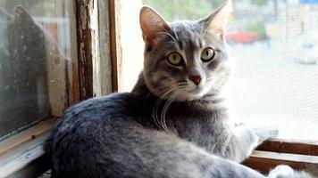 gato gris rayado con ojos amarillos en la ventana.