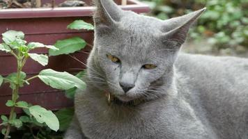 gray cat video
