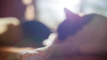 cámara lenta de dos lindos gatos durmiendo con fugas de luz