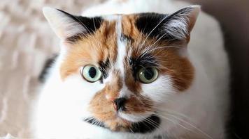 il gatto tricolore fa l'occhiolino