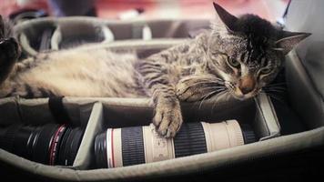 gato do fotógrafo