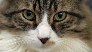 linda cara de gato de perto
