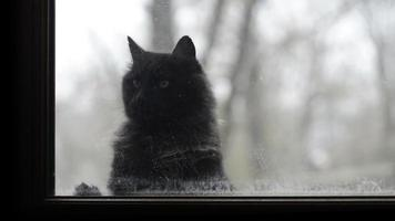 Katzen schauen durch ein schmutziges Fenster