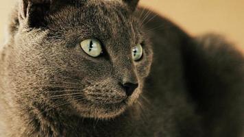 fechar retrato de família de gatos fofos descansando