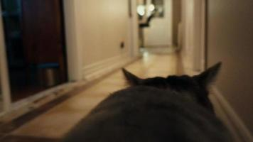 Point of View of a Cat Walking in the House with Camera.