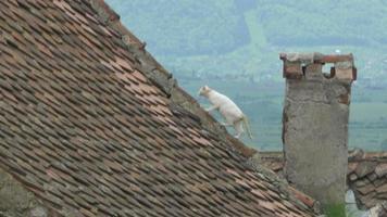 gato en el techo de tejas viejas