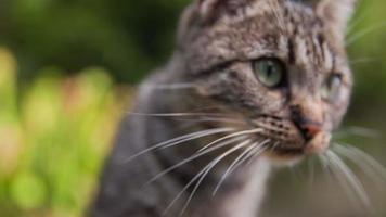 gato mirando alrededor del jardín video
