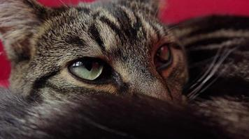 Nahaufnahme einer Katze, die sich auf der roten Couch entspannt