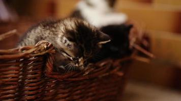 três gatinhos pulando da cesta.
