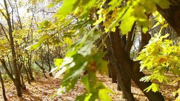 unión de otoño