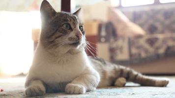 Cute cat lying on the floor