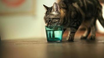 gato bebiendo de un vaso de agua