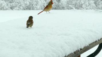 gli uccelli combattono per il becchime coperto di neve nella bufera di neve, la sopravvivenza invernale