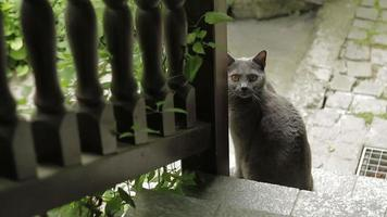Cute cat at bottom of stairs