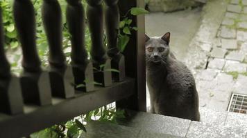 chat mignon au bas des escaliers