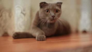 gato olha seguir algo