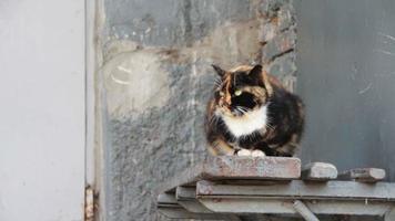 gato sin hogar en la calle