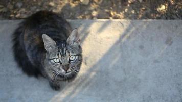 gato atigrado en la calle full hd