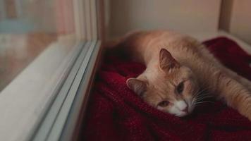 gatto che prende il sole sulla finestra