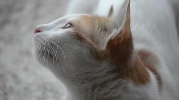 Portrait footage of cat