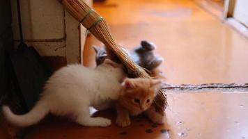 cute  kittens playing indoor video